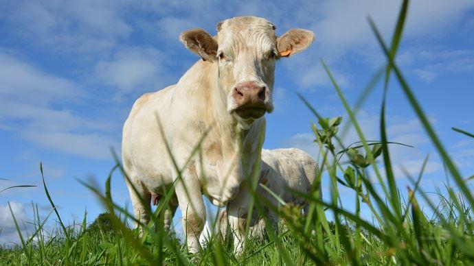 En 2018, la mobilisation autour du projet Herby avait atteint 131 exploitations (bovines, ovines, caprines) représentant 2700ha dans huit départements du Centre-Ouest. (©TNC)