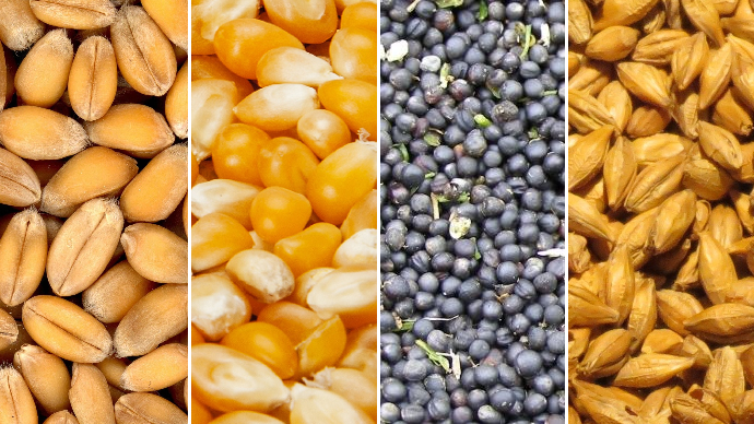Depuis la crise du coronavirus, la volatilité a pleinement fait son retour sur les marchés des grains. (©Pixabay / Création: TNC)