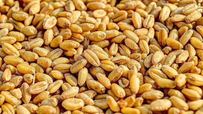 Premières céréales certifiées sans résidus de pesticides prévues pour 2021 avec la filière CRC. (©Pixabay)