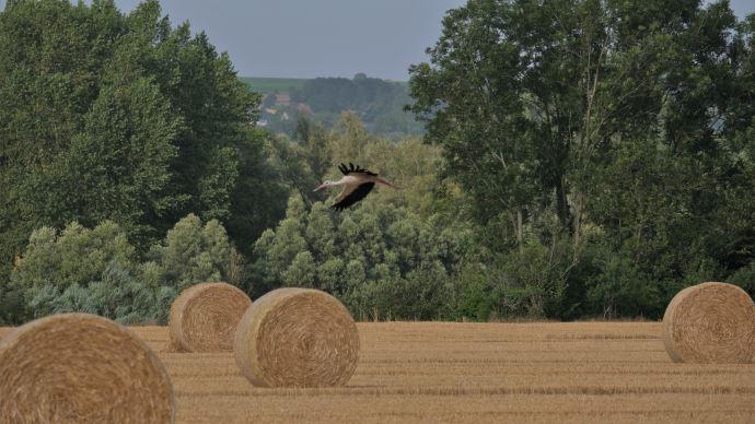 La Confédération paysanne invite, à la lumière de la crise, à repenser un modèle agricole plus durable (@rv59268 (France Agri Twittos))