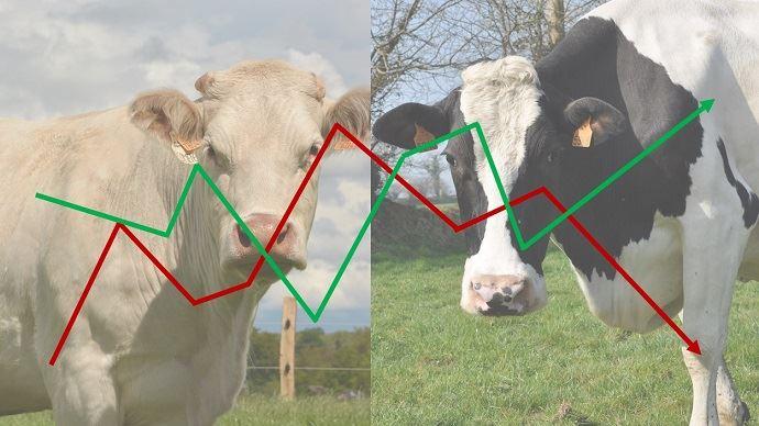 Le coronavirus affecte déjà les marchés de la viande bovine avec les mesures drastiques de confinement et des produits laitiers avec une demande européenne et internationale qui tend à diminuer. (©TNC)