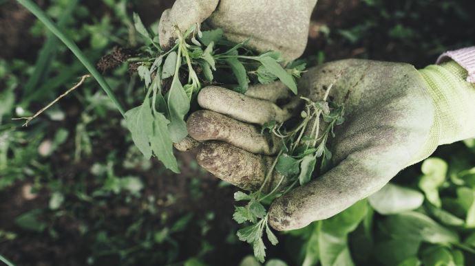 Le gouvernement a précisé le 24 mars le dispositif permettant à ceux qui le souhaitent de travailler en agriculture pendant le Covid-19. (©Pixabay)