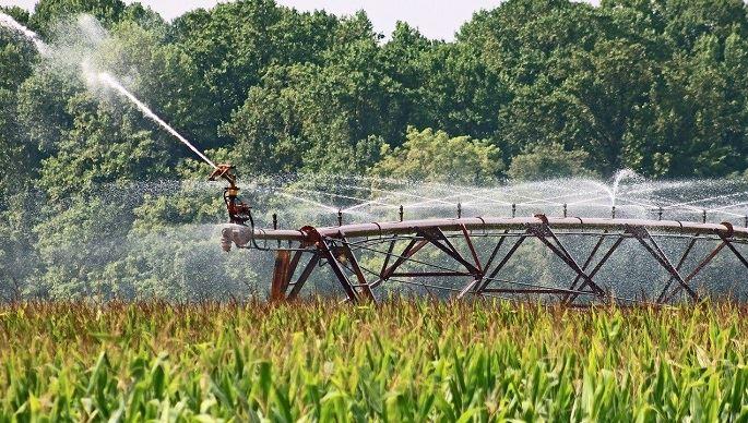 Les chercheurs étudient notamment l'irrigation du maïs en période de restriction d'eau. (©Pixabay)