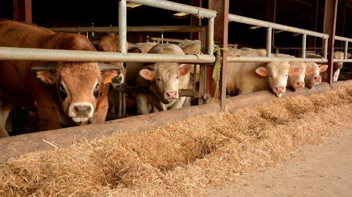 Le prix de la viande bovinedevrait être au minimum à 4,89 euros le kilo, selon un indicateur mis en place par la filière à la suite de la loi Égalim. Or les éleveurs se voyaient proposer la semaine dernière 3,71 euros le kilo.(©TNC)