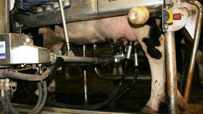 Les éleveurs produisent habituellement 3,3% de lait en plus en avril par rapport aux autres mois. (©TNC)