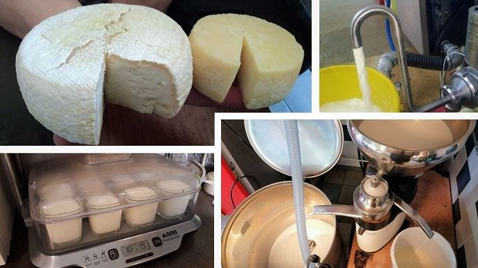 Vente de lait cru aux voisins, transformation à la ferme... Les éleveurs cherchent des solutions pour livrer moins de lait en cette période de crise. (©Page des producteurs de lait)