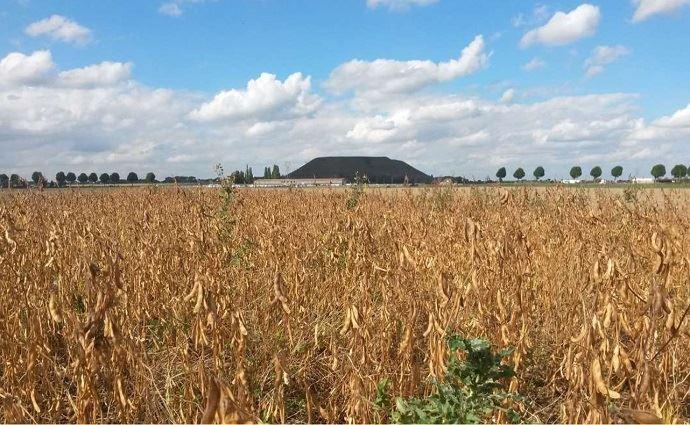 La gestion des adventices est un point clé de l'itinéraire cultural du soja bio. (©Chambre d'agriculture des Hauts-de-France)