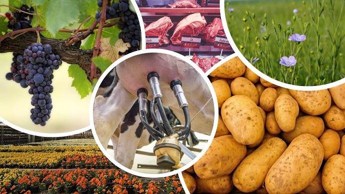 Plusieurs secteurs agricoles sont en difficultés depuis la crise du Covid-19 comme ceux des pommes de terre, du lin, du lait, de la viande, la viticulture et l'horticulture. (©Pixabay)