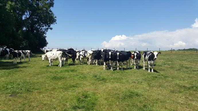 Entre incitation à réduire la production et météo peu favorable, la collecte laitière marque le pas en avril. (©TNC)