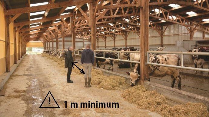 Le coronavirus modifie les habitudes de travail en élevage laitier. (©TNC)