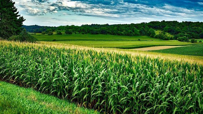 Les conditions météos sont favorables aux rendement du maïs et du soja aux Etats-Unis. Cela pèse alors sur les cours. (©Pixabay)