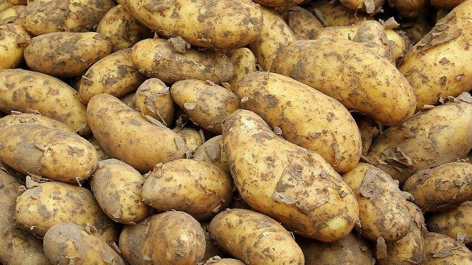 En France, l'excédent de pommes de terre s'élève à 450000 tonnes. (©Pixabay)