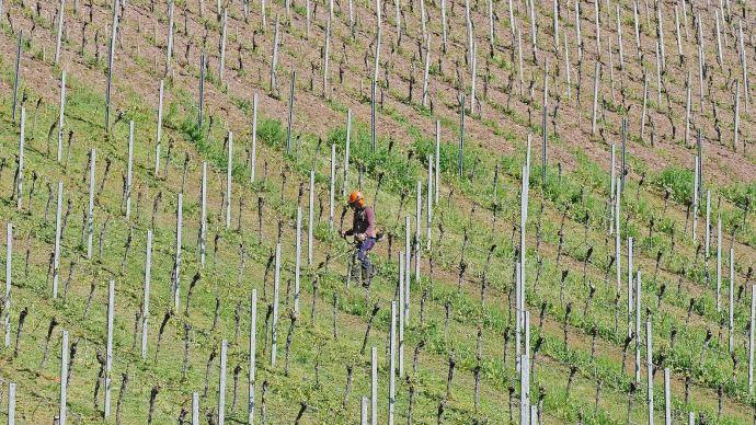 L'agriculture a besoin de saisonniers étrangers, estime le ministre de l'agriculture. (©Pixabay)