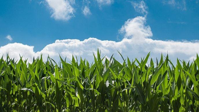 La nouvelle entité issue de ce rapprochement intégrera «le top 10 des semenciers mondiaux grandes cultures». (©Pixabay)