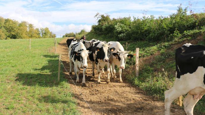 En mars et avril, «des éleveurs ont écourté des lactations et davantage réformé», selonl'Idele. (©TNC)
