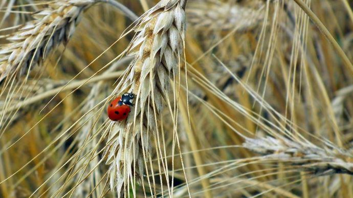 Pour la Cour des comptes européenne, la Pac ne permet pas de préserver la biodiversité des terres agricoles (©Pixabay)