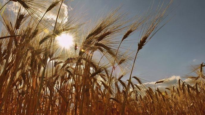 Avec le changement climatique, la distribution des pluies sera inégale au cours de l'année: l'été sera de plus en plus sec et l'hiver plus humide. (©Pixabay)