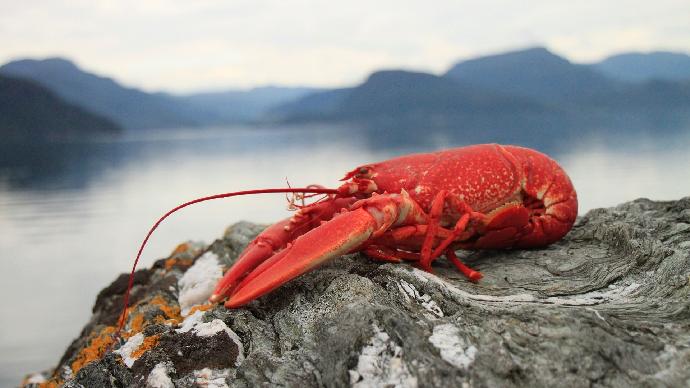 Le homard américain au coeur des tensions commerciales (©Pixabay)