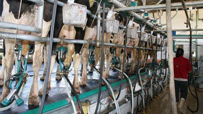 Le marché des produits laitiers n'est pas aussi transparent que celui des céréales sur les prix. (©TNC)