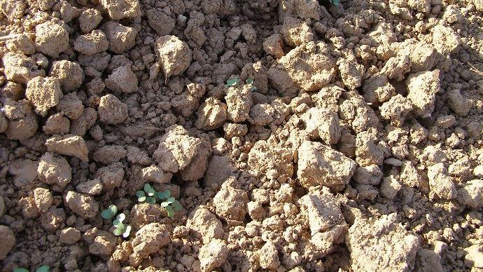 «Être prêt à semer tôt pour être réactif avant la pluie» constitue l'un des leviers majeurs pour une implantation du colza réussie, rappelle Terres Inovia. (©TNC)