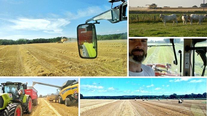 La moisson, une période intense pour les éleveurs qui doivent jongler entre les récoltes de céréales, les chantiers de paille, les récoltes d'herbe et leurs animaux! (©Twitter)