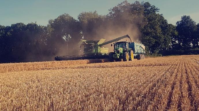 Sur l'ensemble de la coopérative Dijon Céréales, lerendement moyen du blé est en baisse de 5% : à peine 6t/ha. (©@philippedubief)