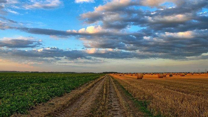 Selon les rapporteurs d'une mission d'information sur le cadre juridique des baux ruraux, 50% des baux ruraux en cours sont simplement verbaux. (©Pixabay)