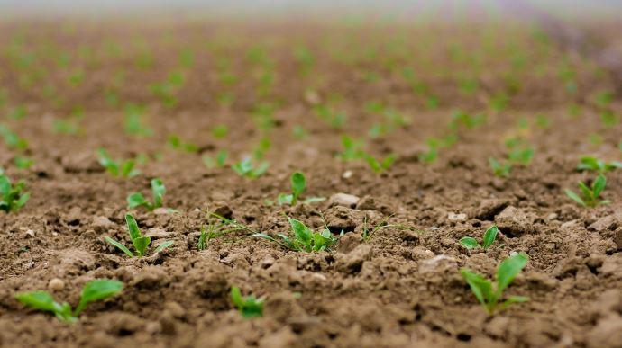L'UFS a dressé le 8 juillet un premier bilan de la crise sur le secteur des semences. (©Pixabay)