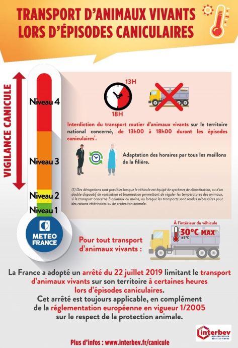 L'intérieur du camion transportant les animaux vivants ne doit pas dépasser 30°C. Mieux vaut donc, par jours de fortes chaleurs, décaler les horaires de transport pour le bien-être des animaux. (©Interbev)