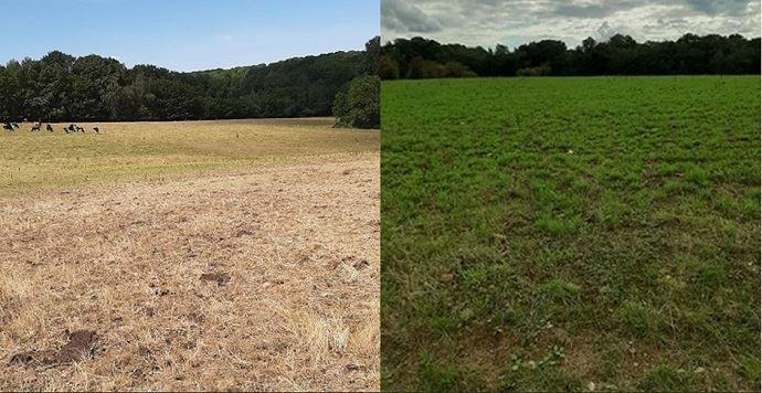 À gauche, une prairie de Vincent en juillet. À droite, une photo du 20 août 2020, après 55 mm de pluie. (©Vincent Delargillière)
