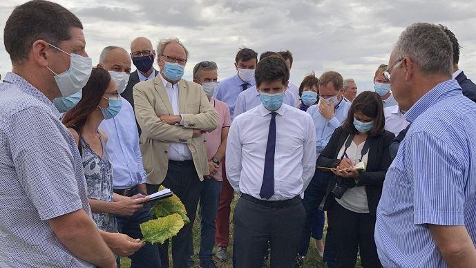 Julien Denormandie, en visite fin juillet d'une exploitation de Seine-et-Marne touchée par la jaunisse virale des betteraves. (©Ministère de l'agriculture)