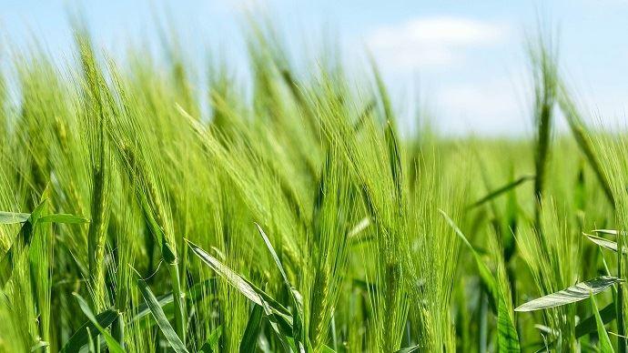 La hausse des surfaces agricoles cultivées en bio en 2019 est de 13% par rapport à 2018. (©Pixabay)