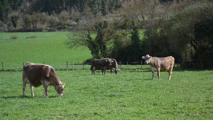 Face à la sécheresse, les éleveurs bénéficieront d'une «reconnaissance decirconstances exceptionnelles». (©TNC)