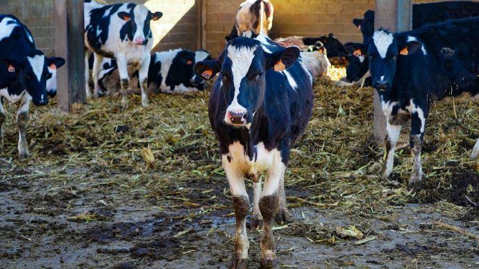 Les Français se montrent largement favorables à la mise en place de mesures supplémentaires pour assurer le bien-être des animaux d'élevage. (©Pixabay)