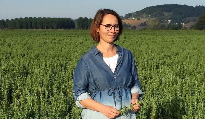 Aurélie Barada, devant sa parcelle de stévia bio. Parmi les variétés utilisées: Larrerre, FP, Leack et Septo 5 pour répartir les risques. (©TNC)
