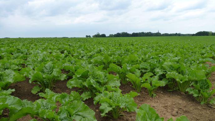 Les professionnels s'engagent sur la réduction de 25% de l'utilisation des néonicotinoïdes en enrobage de semence.(©TNC)