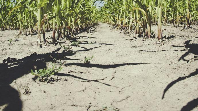 Face à l'aggravation de la sécheresse, le ministre a annoncé le 17 septembre de nouvelles mesures (©Pixabay)