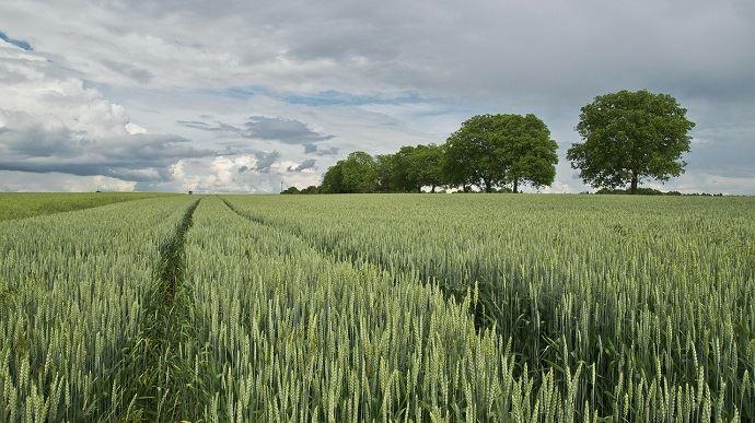 Syngenta entend accompagner les agriculteurs dans la performance économique, environnementale et sociale, et les aide face au changement climatique. (©Pixabay)