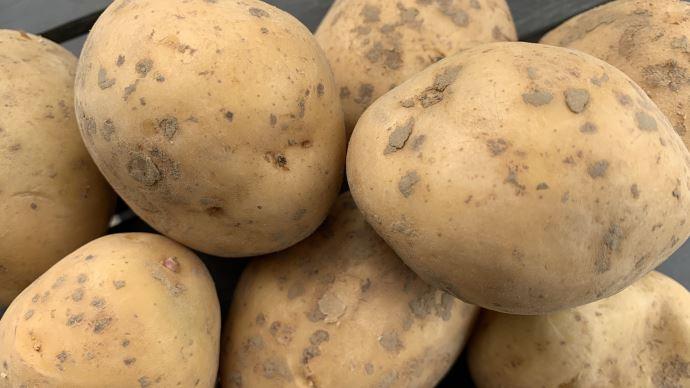 Face à des perspectives de marché incertaines, l'UNPT recommande une diminution de 15% des surfaces en pommes de terre pour 2021 (©TNC)