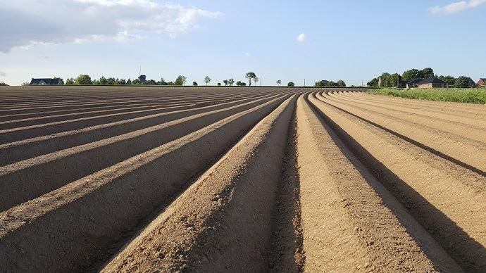 Selon le NEPG, les surfaces de pommes de terre 2021 devraient être réduites d'au moins 15% par rapport à cette campagne. (©TNC)