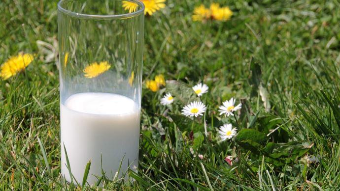 Pour la FNPL, les coopératives laitières n'ont pas joué le jeu de la loi Alimentation. (©Pixabay)
