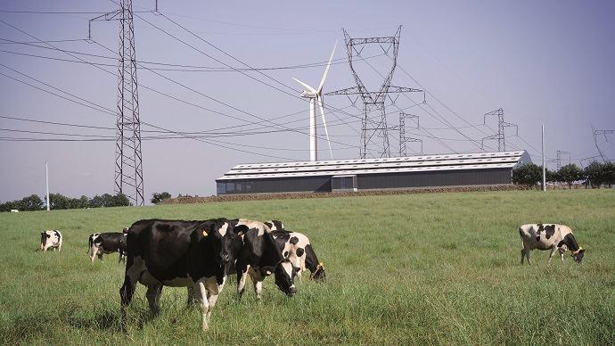 Soyons honnêtes: notre photo est un montage! Pour autant, si les lignes à hautes tensions ou encore les éoliennes implantées à proximité peuvent perturber le troupeau, ne sous-estimons pas les courants parasites et défauts électriques de l'élevage lui-même! (©TNC)