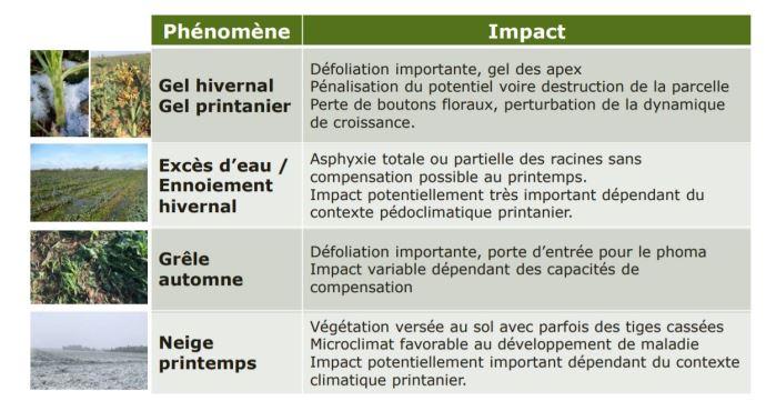 Phénomènes climatiques extrêmes et conséquences sur le colza (©Terres Inovia)