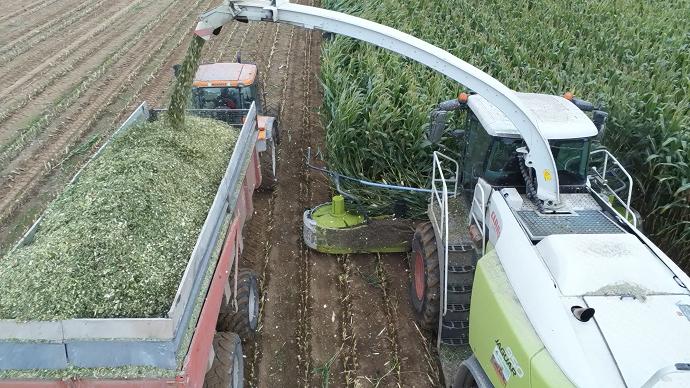 Cette année, les récoltes ont démarré très précocement et se sont échelonnées sur deux mois, et les rendements sont finalement meilleurs que prévu. (©TNC)