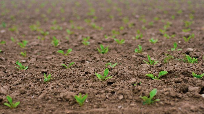 La France reste leader de la production et de l'exportation de semences, mais la réglementation continue de freiner la dynamique du secteur, a rappelé l'UFS lors d'une conférence de presse, le 4 novembre. (©Pixabay)
