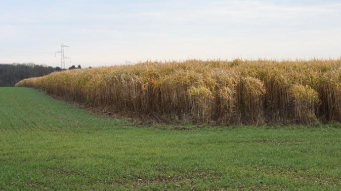 Avec le projet BFF, l'ambition est d'aller vers «des filières de biomasse ligno-cellulosique compétitives et respectueuses de l'environnement». (©TNC)