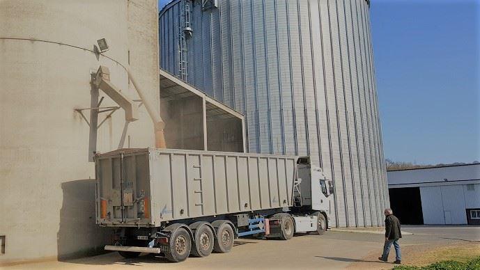 Les cours du blé et du maïs restent hauts, soutenus par la demande et les baisses de production. (©TNC)