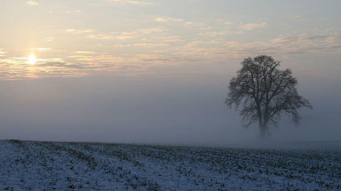 Les baisses de surfaces de colza d'hiver sont particulièrement importantes pour les régions Lorraine et Champagne-Ardenne. (©Pixabay)