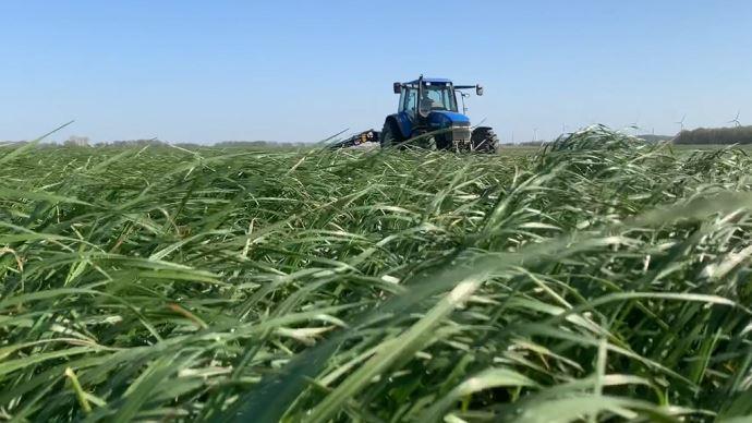 Viser la quantité ou la qualité ? Si le choix doit plutôt se porter sur la qualité (et donc une récolte précoce de l'herbe), tout dépend de l'exploitation. Le principal: bien calculer son besoin pour ne pas manquer de fourrage. (©TNC)