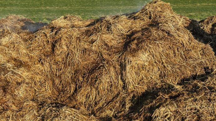Les fumiers doivent être apportés environ deux mois avant le semis de maïs pour que l'azote soit disponible au bon moment pour la culture. (©TNC)